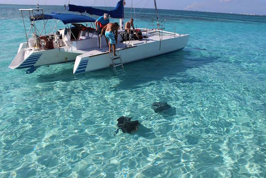 Swimming with the Sting Rays in Grand Cayman.