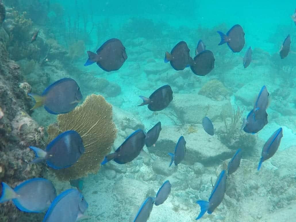 trunk bay snorkeling
