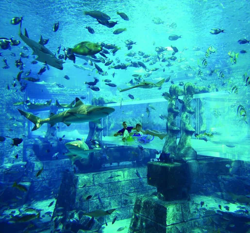 marine and water park adventure nassau