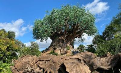 Travel During A Pandemic: Visiting Disney's Animal Kingdom
