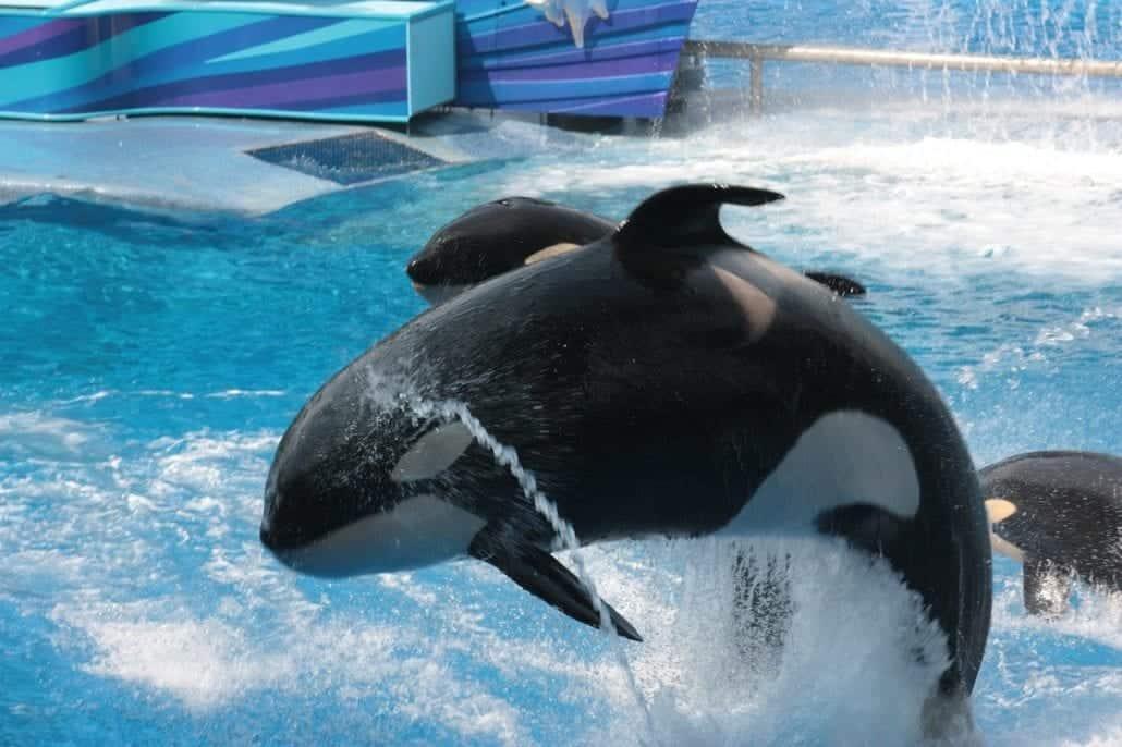 SeaWorld orlando whale florida