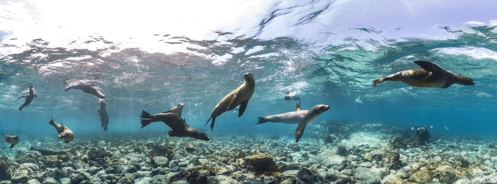 galapagos seals adventures by disney