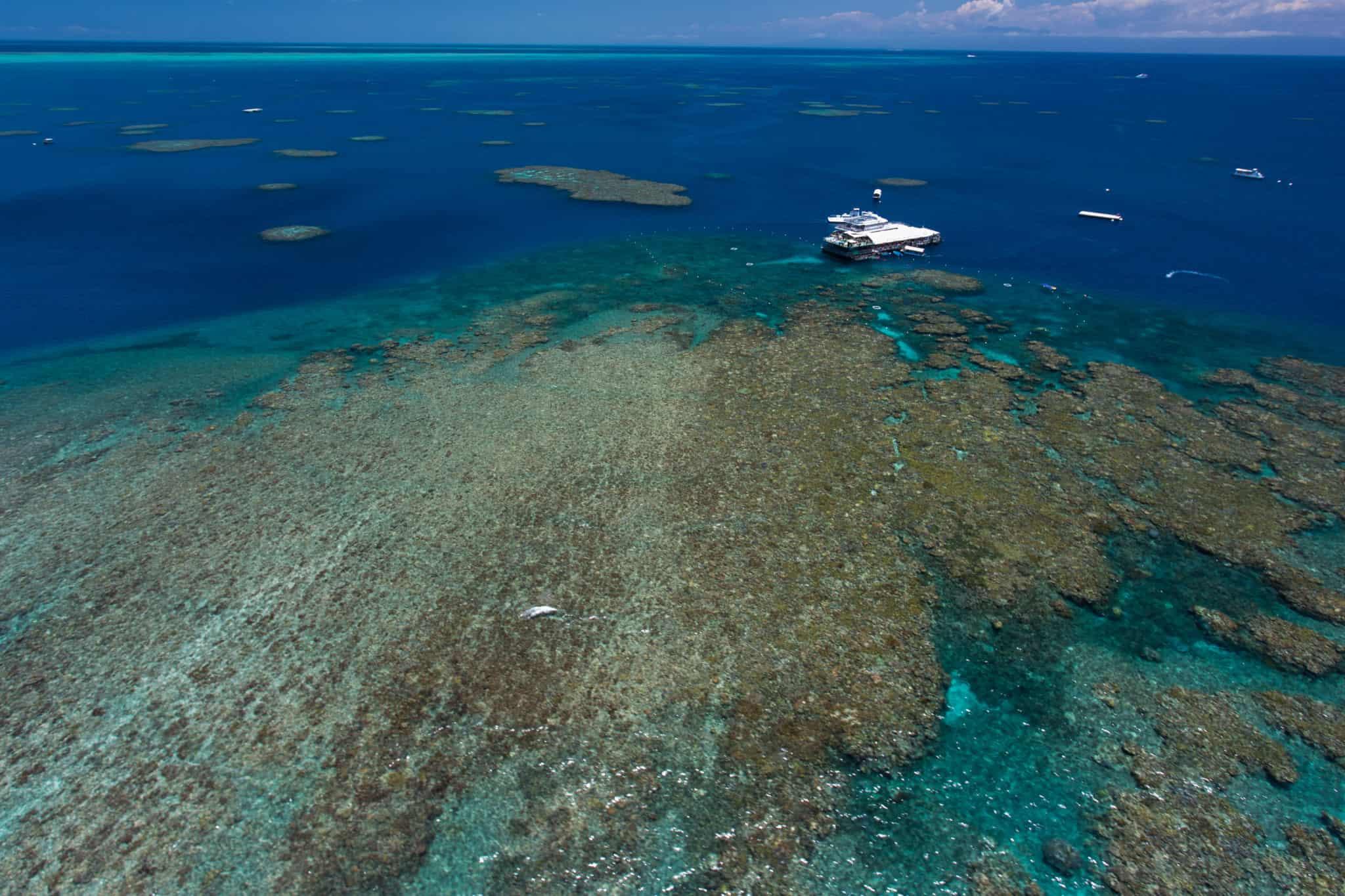 cairns australia reef