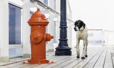 dog cunard kennels fire hydrant lamppost