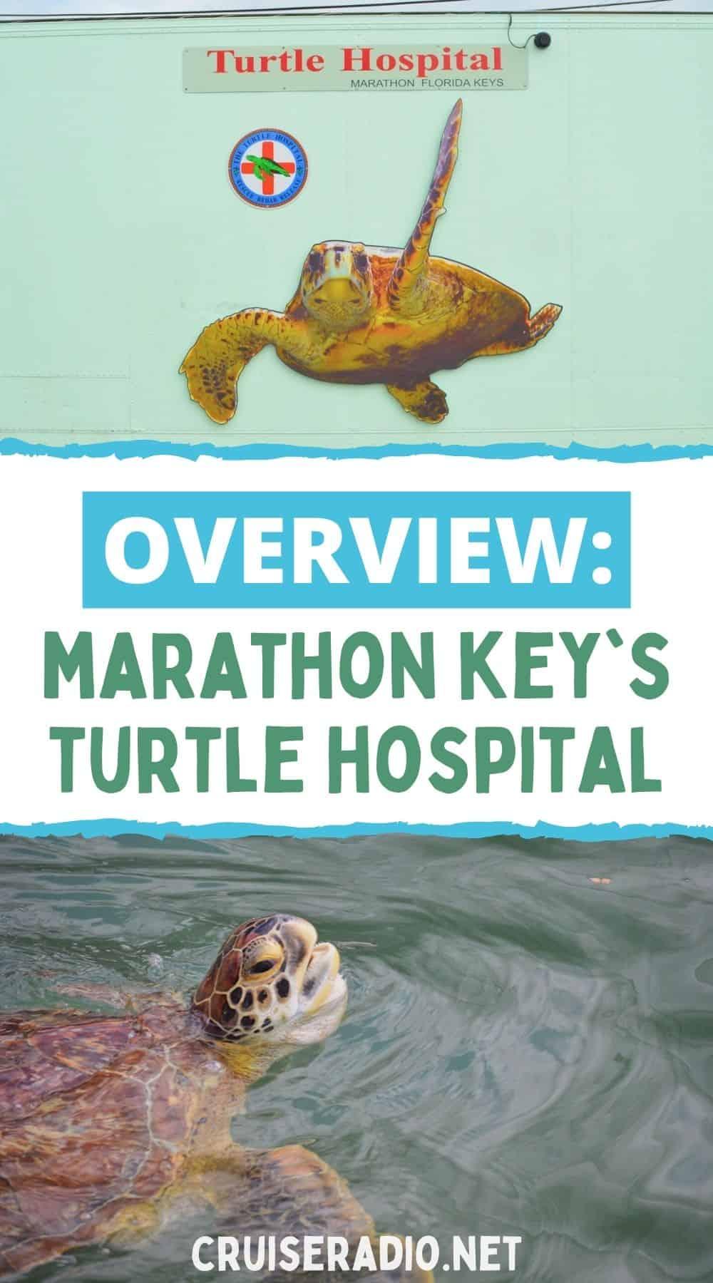 overview marathon key turtle hospital