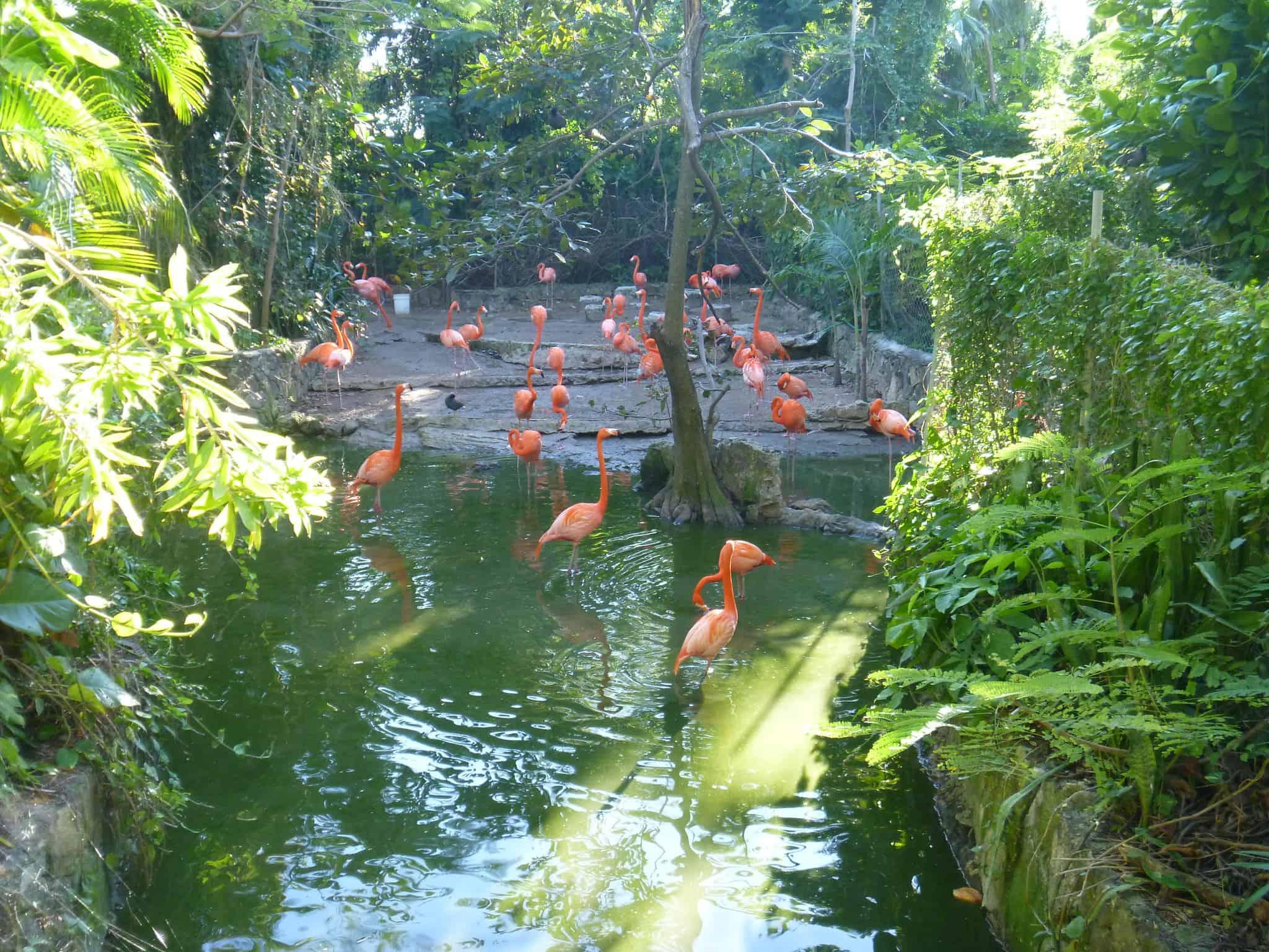 Ardastra Gardens nassau bahamas