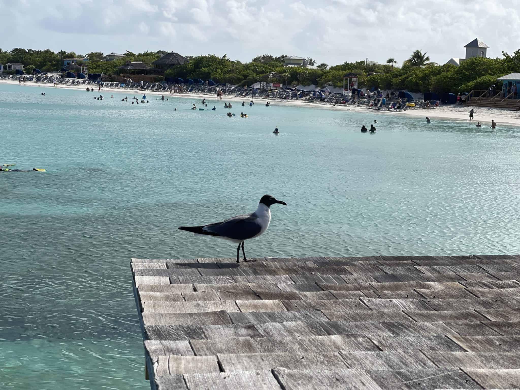 half moon cay beach bird