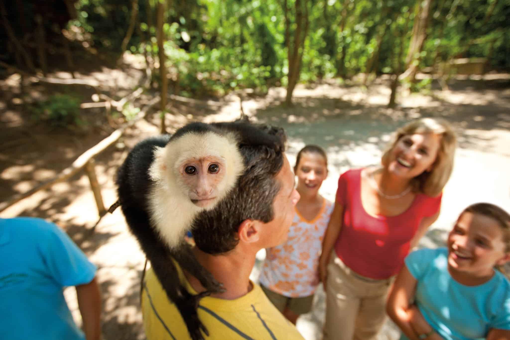 monkey roatan honduras carnival