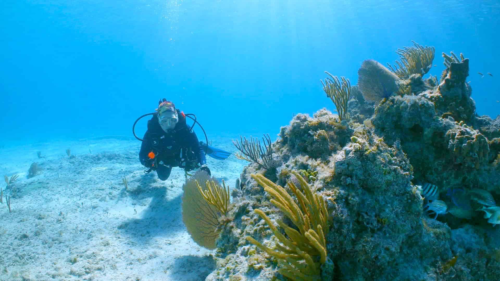 ocean cay coral