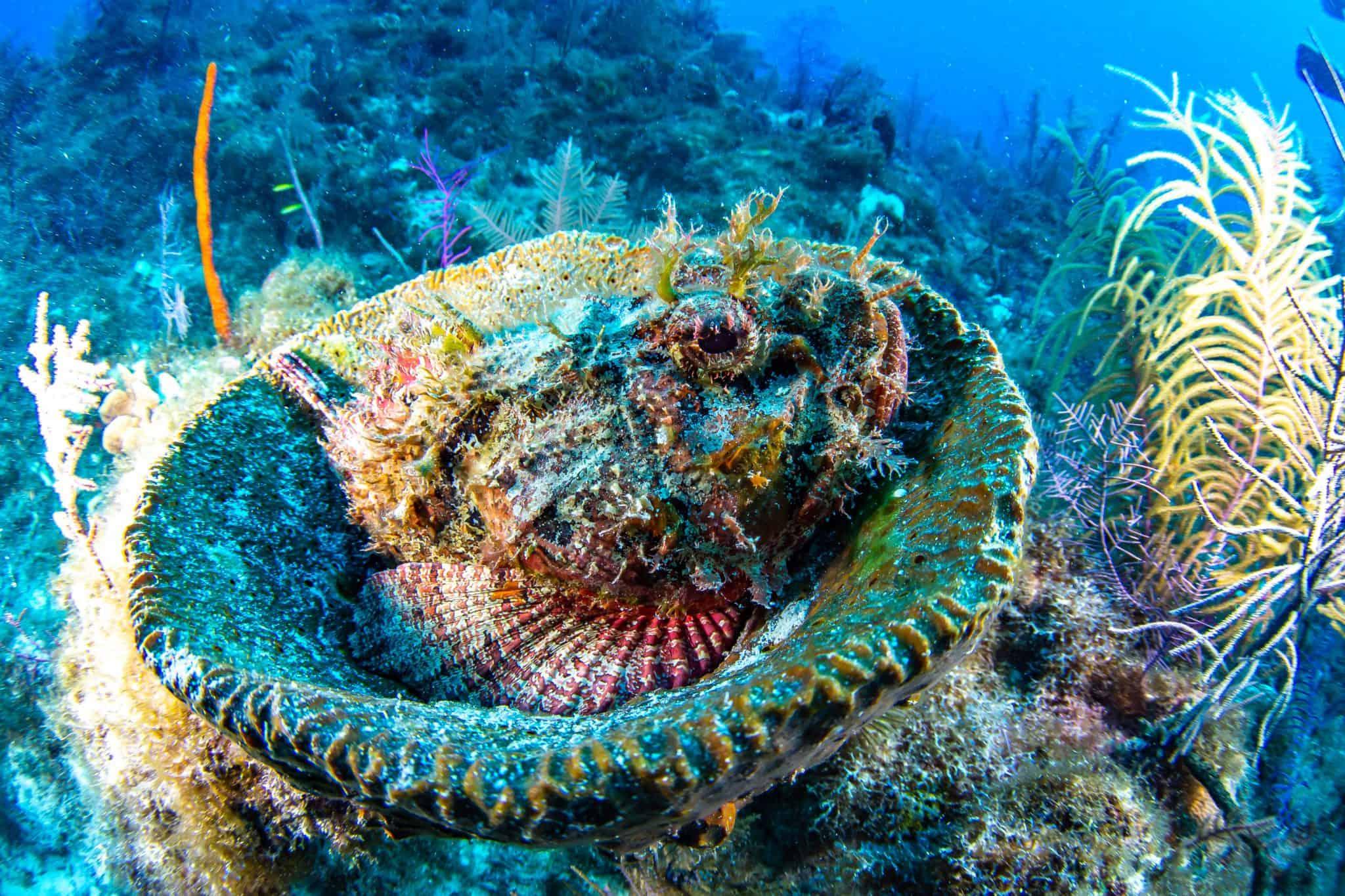 coral ocean cay msc